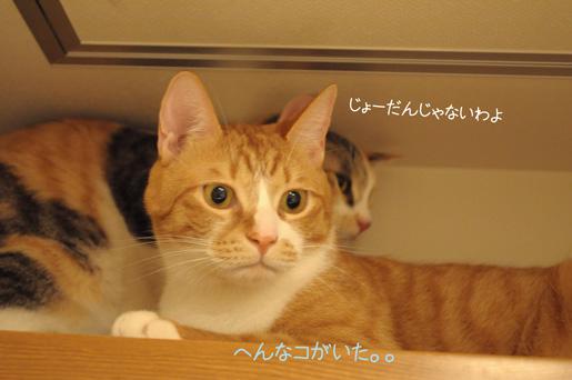 DSC_0102_20091121205023.jpg
