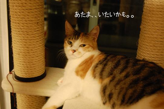 DSC_0141_20091020215245.jpg
