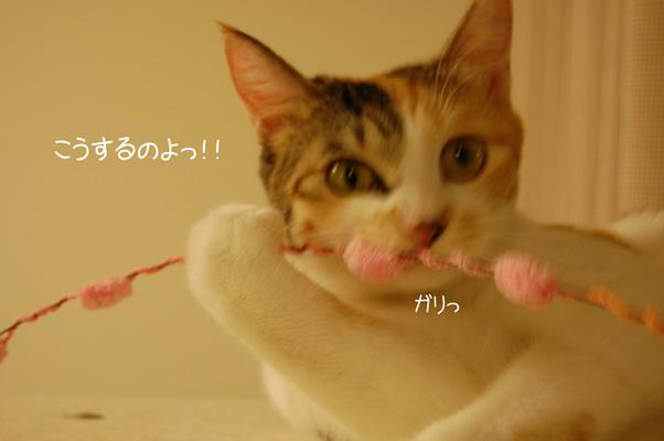 DSC_0142_20090929224607.jpg
