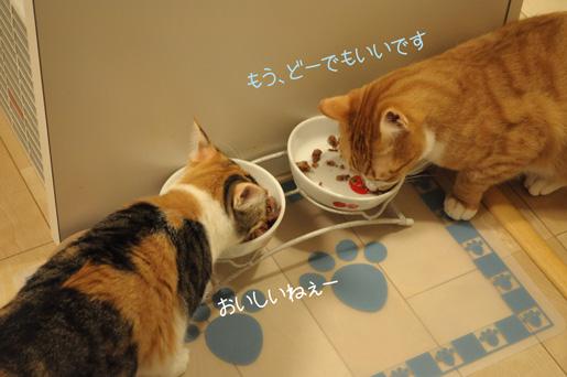 DSC_0160_20100111222237.jpg