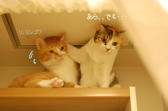 DSC_0205_20091017070300.jpg