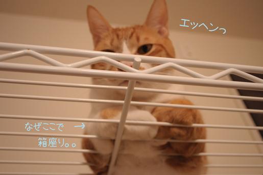 DSC_0223_20091229215241.jpg