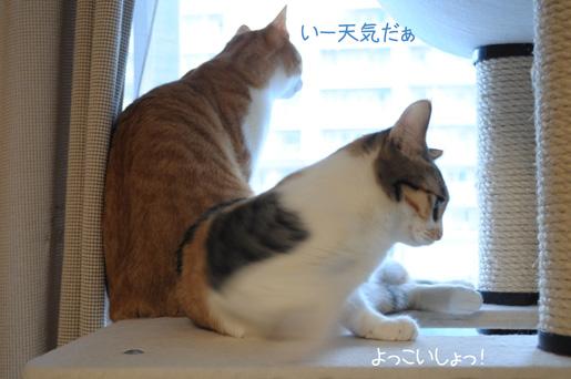 DSC_0242_20091130075348.jpg