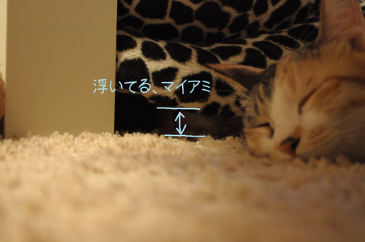 DSC_0264_20100112222257.jpg