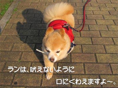 530_8.jpg