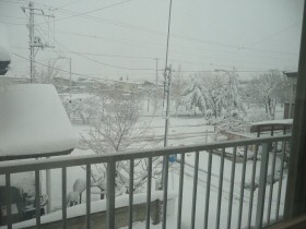雪だよ! 雪っ!