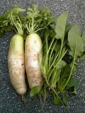 野菜120