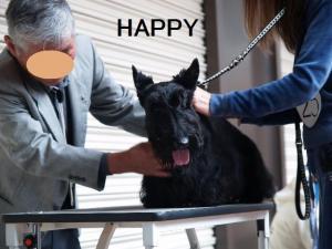 HAPPY審査中