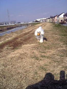 bo-runage20070127.jpg
