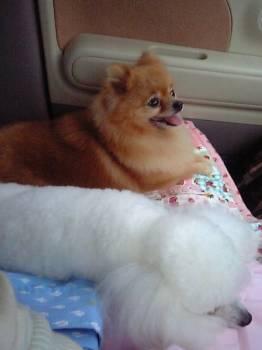 hayakukaerou20070629.jpg