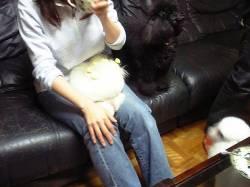 ソファーに小太郎