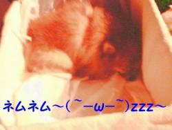 寝てますよ~