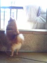 お外に行きたい!!