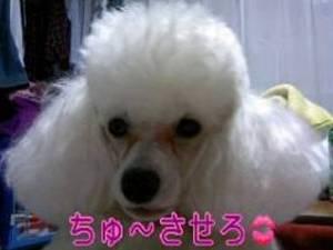 sukida20071204.jpg