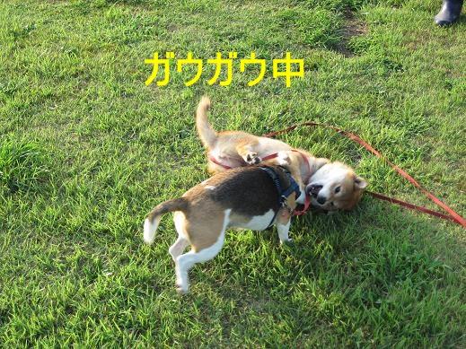 さくらちゃん&チョビ5
