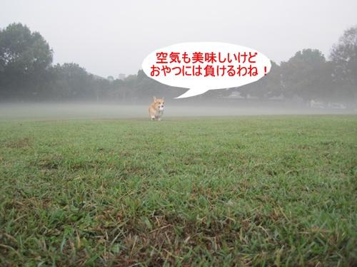 朝の公園2