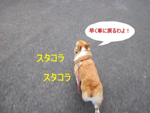 IMG_1442.jpg