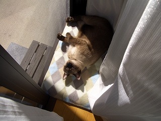 日向ぼっこ~①
