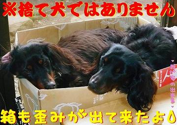 捨て犬ではありません( *´艸`)クスクス