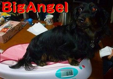 BigAngel