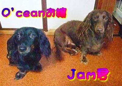 O'ceanお嬢&Jam君