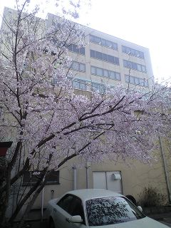 sendai-sakura08.jpg