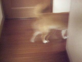 2009_0520_224306.jpg