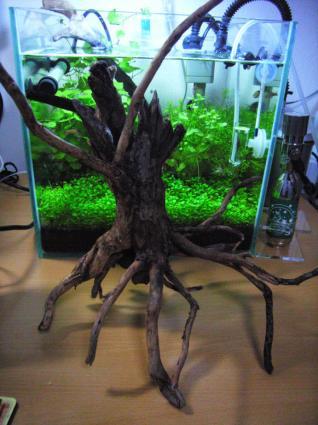 買ってきた枝流木