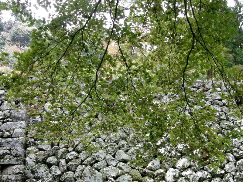 西山興隆寺の紅葉 モミジ 11月7日