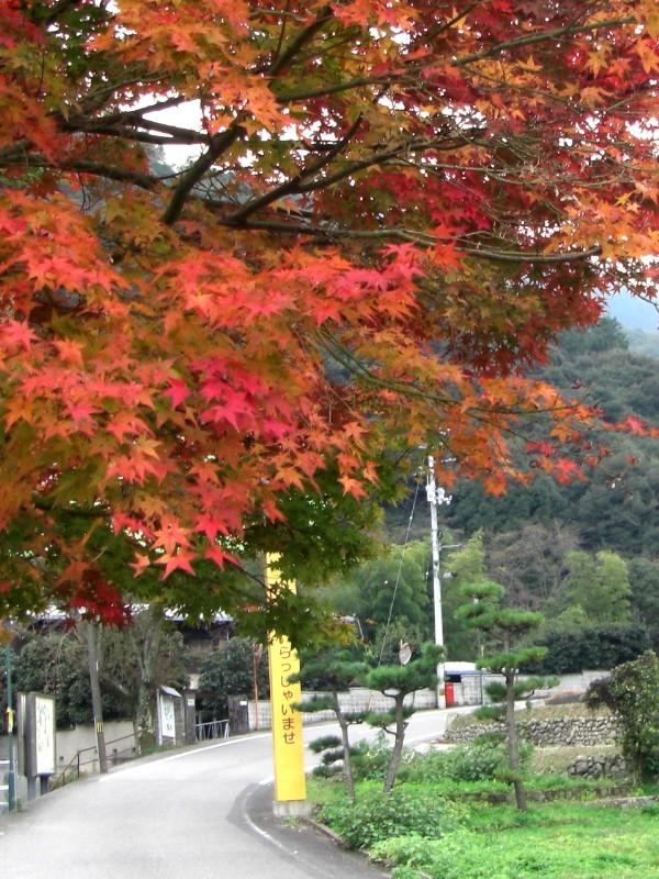 鈍川温泉 渓谷 紅葉