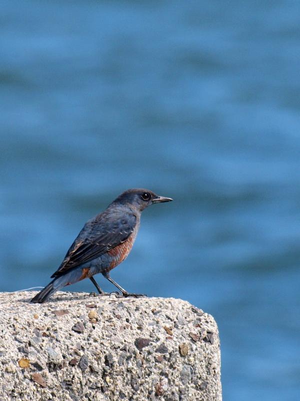 野鳥 新居浜市 マリンパーク