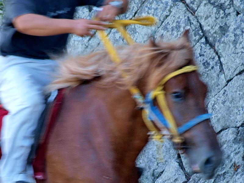 菊間町 加茂神社 お供馬の走り込み 調教