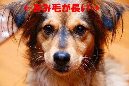 2007_02_07022 らな