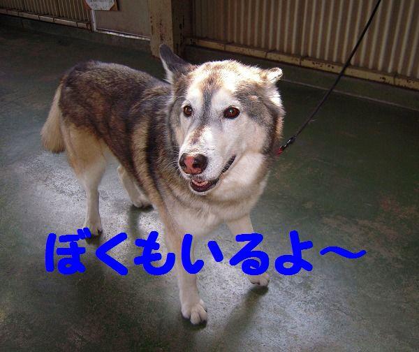 だっこ王子 014 - コピー