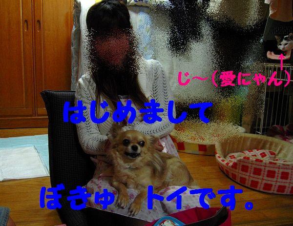 トイ 021 - コピー
