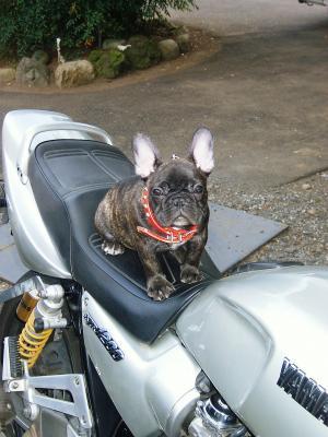 バイクいいかも。