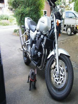 バイク乗りたいな~