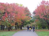 真駒内公園。