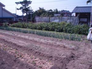 090927工房裏畑