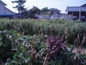 090927工房裏農園