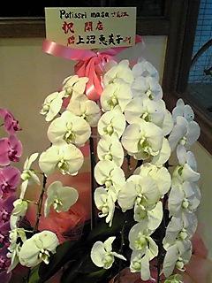 上沼恵美子の花