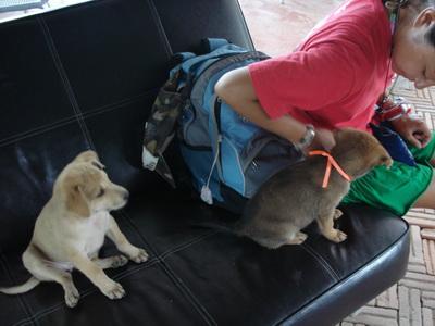 サムイ島の天気 船着場犬