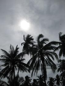 サムイ島・天気・ヤシの木
