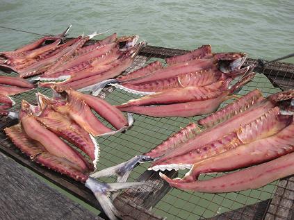 サムイ島・天気・桟橋・魚の干物
