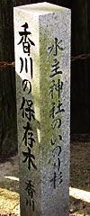 香川県保存木