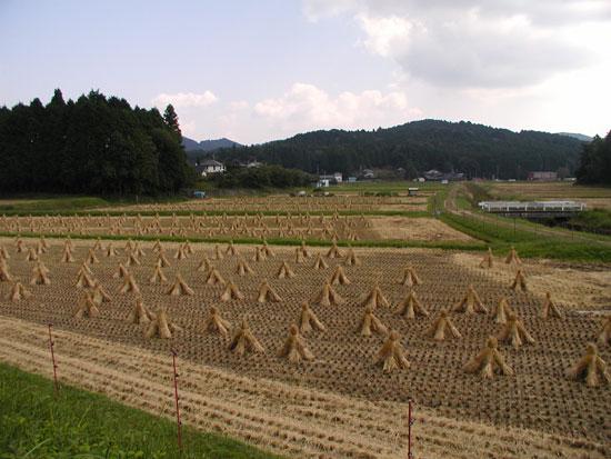 2008.10.4.タイネ1