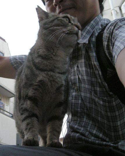 ネコの座布団