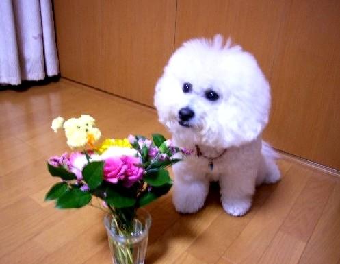 さんたとお花