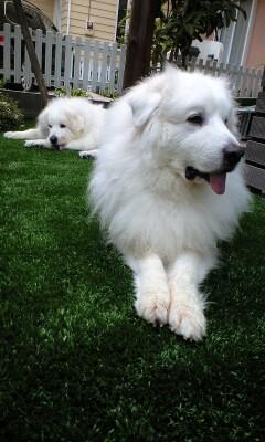 ロングパイル人工芝で満足