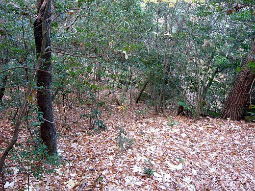 キャンプ大阪の枯葉林-2